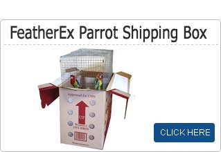 parrot shipping box