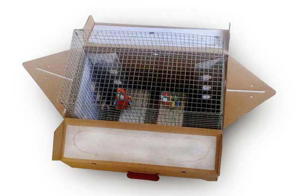Live Parrot shipping box
